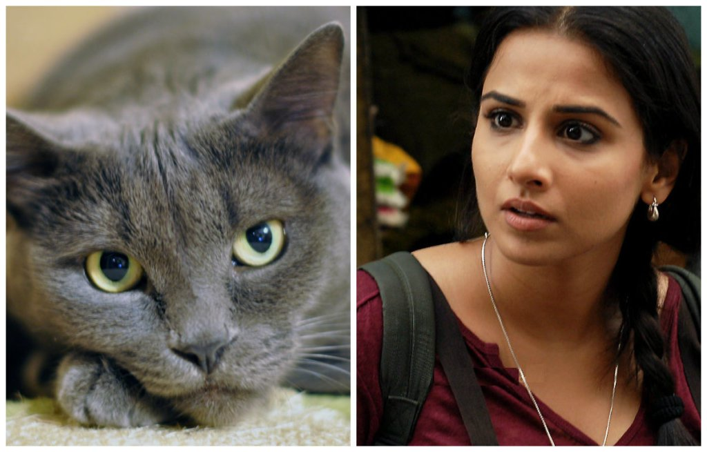 Vidya Balan is Scared of Cats