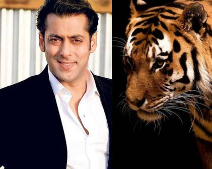 Bengal Tiger Made Salman Khan's 'Sher Khan' In Trouble