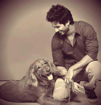 Shahid Kapoor Mourns Loss of Kaizer His Pet