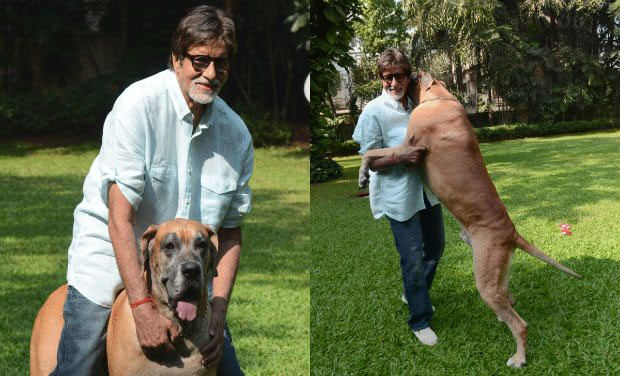 Amitabh Bachchan mourns death of pet dog Shanouk