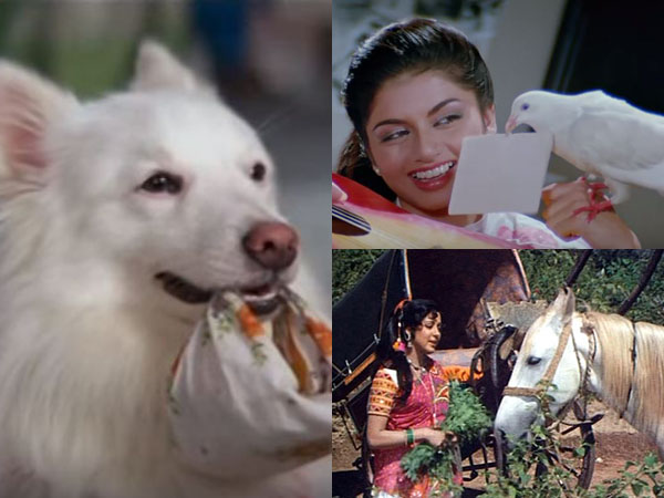 Bollywood movies in which pets played a pivotal role
