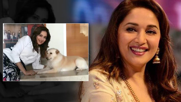 Madhuri Dixit's post on her dog's demise will leave you teary-eyed!