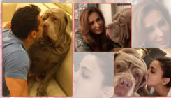 Iulia Vantur, Sonakshi Sinha and others mourn death of Salman Khan's pet My Love
