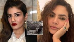 Raveena Tandon, Esha Gupta raise their voices against a Nilgai being buried alive in Bihar