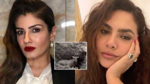 Nilgai Buried Alive Bollywood celebs reactions
