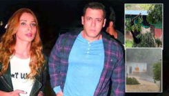 Salman Khan's Panvel farmhouse hit by cyclone Nisarga; Iulia Vantur shares inside pics and videos of the wreckage