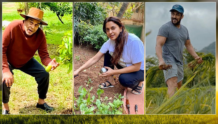 From Salman Khan to Dharmendra- B-town stars who turned to farming amidst lockdown